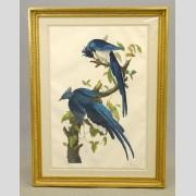 Large framed Audubon print,